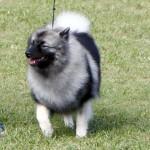 Bermuda Kennel Club Dog Show, October 20 2012 (10)