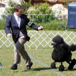Bermuda Kennel Club Dog Show, October 20 2012 (15)
