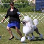 Bermuda Kennel Club Dog Show, October 20 2012 (16)