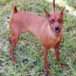 Bermuda Kennel Club Dog Show, October 20 2012 (21)