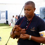 Bermuda Kennel Club Dog Show, October 20 2012 (23)