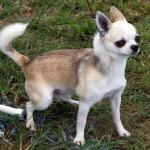 Bermuda Kennel Club Dog Show, October 20 2012 (25)