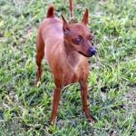 Bermuda Kennel Club Dog Show, October 20 2012 (26)