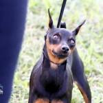 Bermuda Kennel Club Dog Show, October 20 2012 (27)