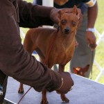 Bermuda Kennel Club Dog Show, October 20 2012 (28)