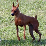 Bermuda Kennel Club Dog Show, October 20 2012 (31)