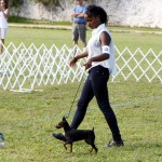 Bermuda Kennel Club Dog Show, October 20 2012 (34)