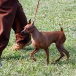 Bermuda Kennel Club Dog Show, October 20 2012 (37)