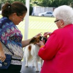 Bermuda Kennel Club Dog Show, October 20 2012 (39)