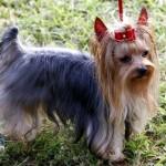 Bermuda Kennel Club Dog Show, October 20 2012 (41)
