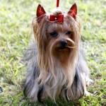 Bermuda Kennel Club Dog Show, October 20 2012 (42)