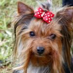 Bermuda Kennel Club Dog Show, October 20 2012 (43)