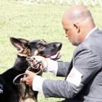 Bermuda Kennel Club Dog Show, October 20 2012 (51)