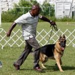 Bermuda Kennel Club Dog Show, October 20 2012 (53)