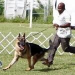 Bermuda Kennel Club Dog Show, October 20 2012 (54)