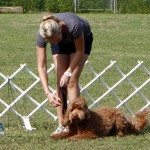 Bermuda Kennel Club Dog Show, October 20 2012 (62)