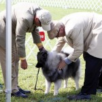 Bermuda Kennel Club Dog Show, October 20 2012 (8)