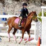 Inwood Hunter Jumper Show Horses Bermuda Equestrian, November 25 2012 (11)