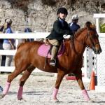 Inwood Hunter Jumper Show Horses Bermuda Equestrian, November 25 2012 (15)