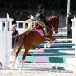 Inwood Hunter Jumper Show Horses Bermuda Equestrian, November 25 2012 (18)