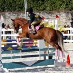 Inwood Hunter Jumper Show Horses Bermuda Equestrian, November 25 2012 (21)