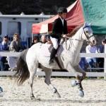 Inwood Hunter Jumper Show Horses Bermuda Equestrian, November 25 2012 (26)
