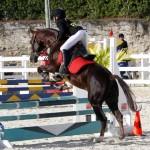 Inwood Hunter Jumper Show Horses Bermuda Equestrian, November 25 2012 (45)