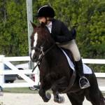 Inwood Hunter Jumper Show Horses Bermuda Equestrian, November 25 2012 (50)