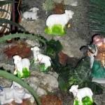 Almeida Family Portuguese Presepio Nativity Scene Christmas Bermuda, December 23 2012 (15)