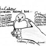 bermuda cahow drawings students (10)
