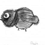 bermuda cahow drawings students (11)