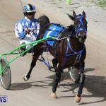 Harness Pony Racing Champions, Bermuda February 10 2013 (20)