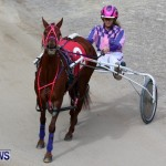 Harness Pony Racing Champions, Bermuda February 10 2013 (22)