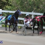 Harness Pony Racing Champions, Bermuda February 10 2013 (8)