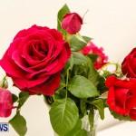 75th Agricultural Exhibition Bermuda Roses, April 18 2013-43
