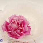 75th Agricultural Exhibition Bermuda Roses, April 18 2013-59