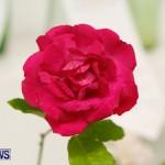 75th Agricultural Exhibition Bermuda Roses, April 18 2013-61