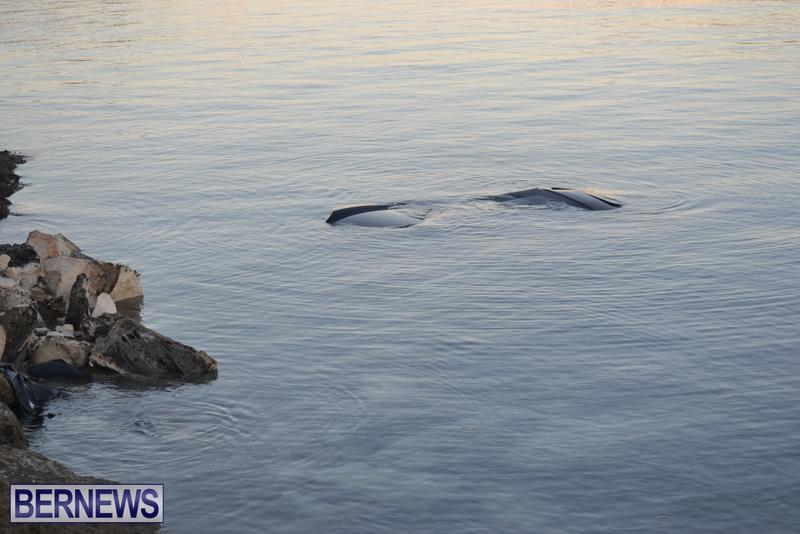 Car-Overboard-Bermuda-May-16-2013-2