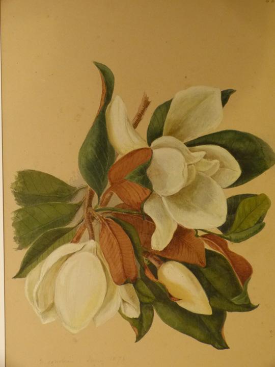 magnolia-copy