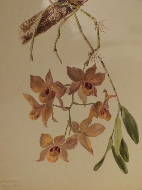 orchid-copy
