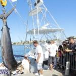 overproof marlin bermuda 2013 (1)