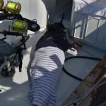 overproof marlin bermuda 2013 (2)