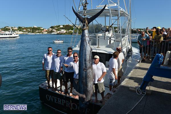 overproof marlin bermuda 2013 (5)