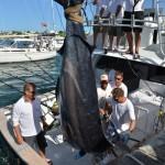 overproof marlin bermuda 2013 (7)