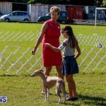 Bermuda Kennel Club BKC Dog Show, October 19, 2013-1