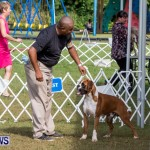 Bermuda Kennel Club BKC Dog Show, October 19, 2013-12