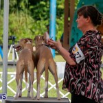 Bermuda Kennel Club BKC Dog Show, October 19, 2013-13