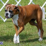 Bermuda Kennel Club BKC Dog Show, October 19, 2013-18