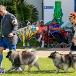 Bermuda Kennel Club BKC Dog Show, October 19, 2013-19