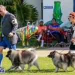 Bermuda Kennel Club BKC Dog Show, October 19, 2013-19